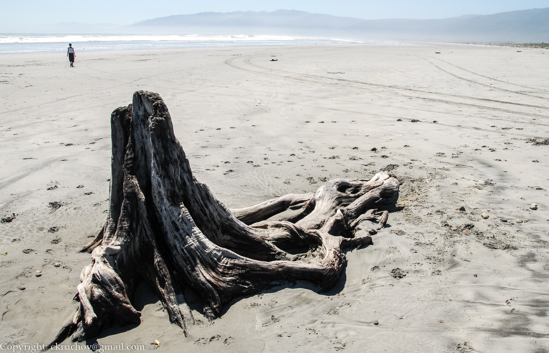 Træstup på stranden. Nordsiden af Sydøen NZ